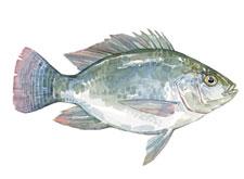 fish_cat
